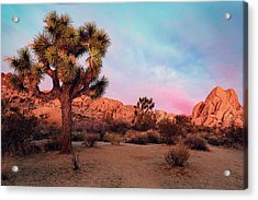 Joshua Tree With Dawn's Early Light Acrylic Print
