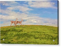 Journey To The Top Of The World Acrylic Print