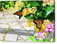 Journey With An Open Heart Acrylic Print by Robyn King