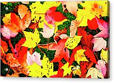 Journeys Into Fall - Prints Of My Original Oil Paintings Acrylic Print