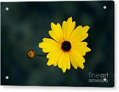 Joy Acrylic Print by Adrian LaRoque