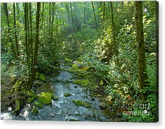 Joyce Kilmer Memorial Forest Acrylic Print by David Lee Thompson