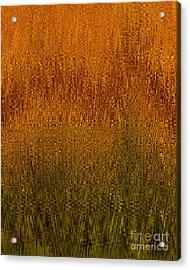 Joyful Harvest Acrylic Print