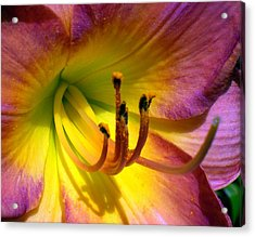 Joyful Lily Acrylic Print by Cynthia Daniel