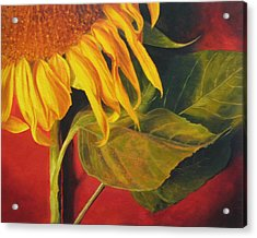Joy's Sunflower Acrylic Print by Marina Petro