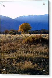Acrylic Print featuring the photograph Judy's Tree by Steven Holder
