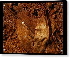 jul 18, 2016, Leaves OF Beauty Acrylic Print by Nayan Mipun