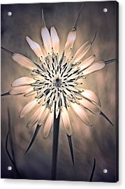 July 1 2010 Acrylic Print by Tara Turner