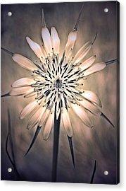 July 1 2010 Acrylic Print by Tara Turner