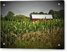 0020 - July Corn Acrylic Print
