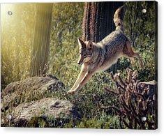 Jumping Rocks Acrylic Print by Elaine Malott