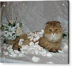 June 2005 Acrylic Print