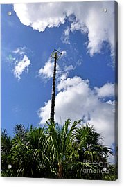Acrylic Print featuring the photograph Jungle Bungee Tower by Francesca Mackenney