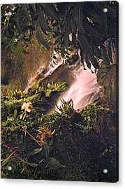 Jungle Acrylic Print by Utopia Concepts
