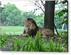 Acrylic Print featuring the photograph Jungle King by John Black