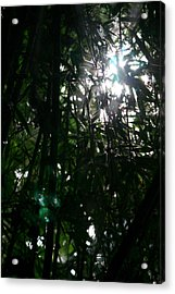 Jungle Light Acrylic Print by Brad Scott