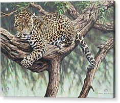 Jungle Outlook Acrylic Print