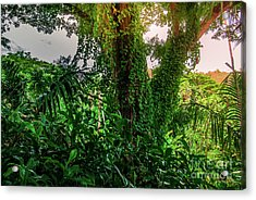 Jungle Vines Kauai Hawaii Acrylic Print by Blake Webster