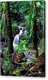 Jungle Waterfall Acrylic Print by Thomas R Fletcher