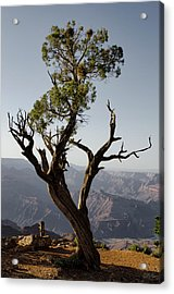 Juniper Tree At Grand Canyon II Acrylic Print by David Gordon