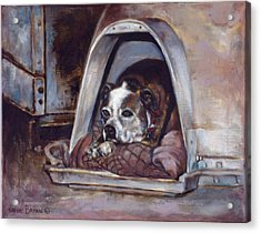 Acrylic Print featuring the painting Junkyard Dog by Harvie Brown