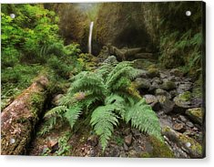 Jurassic Forest Acrylic Print by David Gn