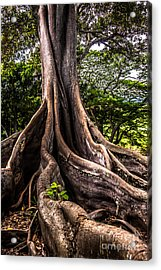 Jurassic Park Tree Roots Acrylic Print