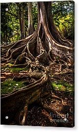 Jurassic Park Tree Trailing Root Acrylic Print