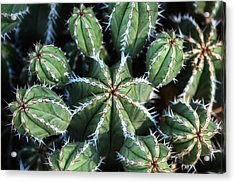 Just A Bit On The Prickly Side  Acrylic Print