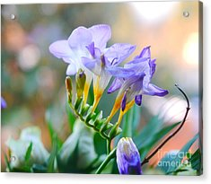 Acrylic Print featuring the photograph Just A Freesia by Lance Sheridan-Peel
