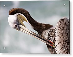 Acrylic Print featuring the photograph Just A Little Itch by Nathan Rupert