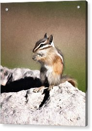 Just A Little Nibble Acrylic Print