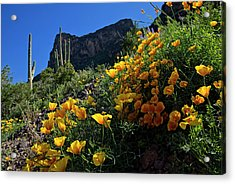 Just A Little Sunshine Acrylic Print by Lucinda Walter
