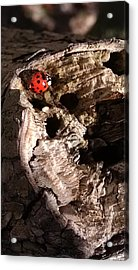 Just A Place To Rest Acrylic Print
