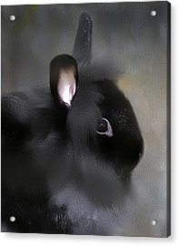 Acrylic Print featuring the photograph Just A Rabbit by Gary Smith