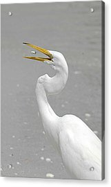 Just A Snack Acrylic Print by Keith Lovejoy
