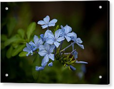 Acrylic Print featuring the photograph Just A Touch Of Blue by Monte Stevens