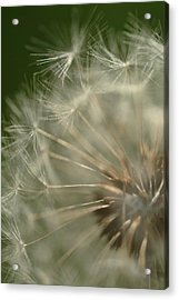 Just A Weed Acrylic Print by Michael McGowan