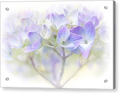 Just A Whisper Hydrangea Flower Acrylic Print by Jennie Marie Schell