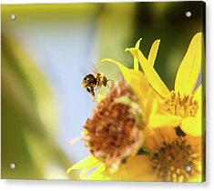 Just Beeing Me Acrylic Print