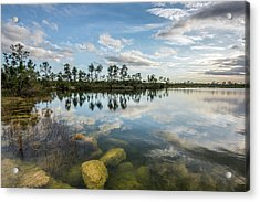 Just Below In The Everglades Acrylic Print