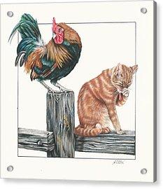 Just Chillin Acrylic Print