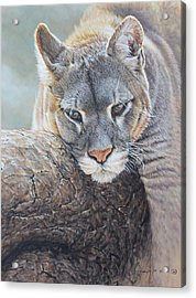 Just Chilling Acrylic Print
