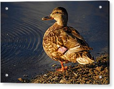 Acrylic Print featuring the photograph Just Ducky by AnnaJanessa PhotoArt