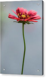 Just For You Acrylic Print