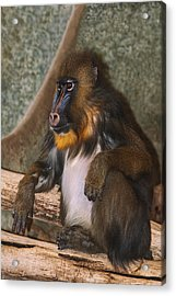 Just Giving Thought As To What If Acrylic Print by Jack Zulli