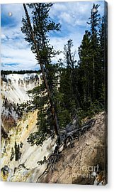 Just Hanging On Acrylic Print by Mel Steinhauer