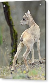 Acrylic Print featuring the photograph Just Kidding Around by Bruce Gourley