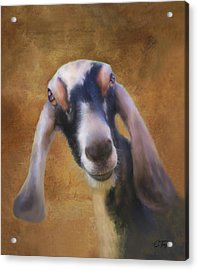 Acrylic Print featuring the mixed media Just Kidding Around by Colleen Taylor