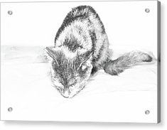 Just Kitty Ing Acrylic Print